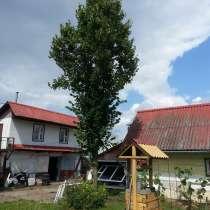 Взрослое дерево липа 8 м, в г.Минск