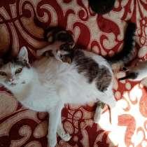 Отдам котят, в Новочеркасске