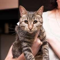 Фелисия – шикарная кошка в поисках дома!, в Москве