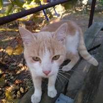 Отдам в надёжные руки кота Тимошу, в Ейске