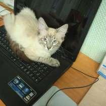 Породистый котенок, в Одинцово