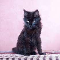 Котята Мейн Кун, девочки, разные окрасы, в Рязани