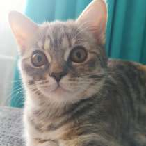 Кошка 4, 5 месяца, в г.Брест