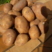 Картофель, в г.Гомель