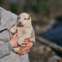 Плюшевые щенята, в Санкт-Петербурге