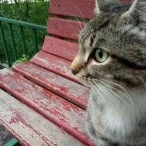 Отдаём молодого кота надёжному хозяину, в г.Астана