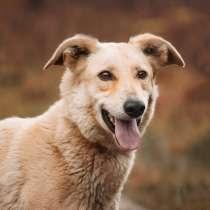 Ласковая, добрая, любящая собака Стеша ищет дом, в Москве