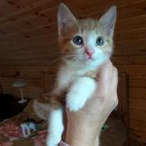 Отдам котят в добрые руки, в Нижнем Новгороде