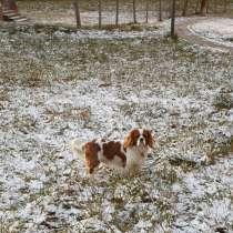 Вязка собак, в Щелково
