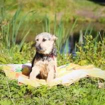 Маленькая нежная собачка ищет дом, в Санкт-Петербурге