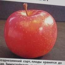 Саженцы плодовых деревьев, в Ростове-на-Дону