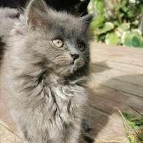 Котёнок 2 месяца бесплатно Киев, в г.Киев