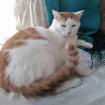 Крупный бело-рыжий котик Даня в добрые руки, в Москве