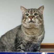 Особенный котик с иммунодифицитом ищет любящие ручки, в Санкт-Петербурге