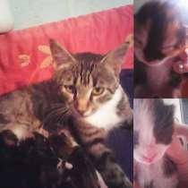 Отдам котят в надежные руки от красивой кошки, в Комсомольске-на-Амуре