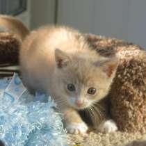 Герасим - маленький рыжий котенок ищет дом, в Москве