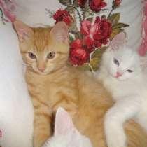 Необычный котик от као мани и рагамаффина, в г.Мариуполь