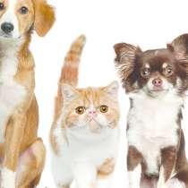 Ветеринарная вызывная служба Динго, в Москве