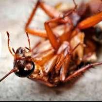 Уничтожение тараканов, в Туле