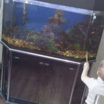 Продам аквариум, в г.Ташкент