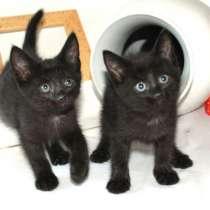 Малыши-черныши. Котята 2 мес в добрые рукию, в Калуге