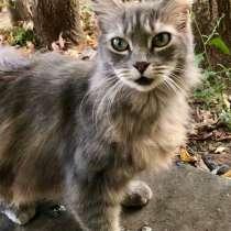 Шикарная пушистая кошка Кикки ждет хозяев, в Москве