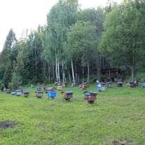 Продам качественный липовый мед, в Симферополе