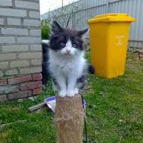 Котят в хорошие руки, в г.Могилёв
