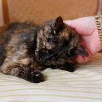 Кошка Веста ищет дом, в Москве
