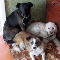 Квартирная передержка собак, в Иркутске