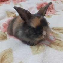 Продам декоративных кроликов, в Междуреченске