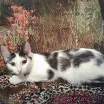 Молодой кастрированный кот ищет любящего хозяина, в Кемерове