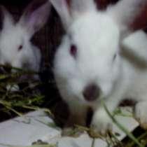 Продам калифорнийских кроликов, в г.Кутаиси