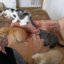 Отдадим (вербных)2-х месячных котят, в Томске