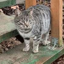 Ласковый домашний котик Тимоша, метис британца в добрые руки, в Москве
