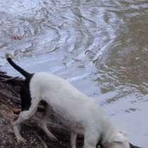 Собака, в Невинномысске