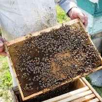 Продам пчелосемьи, в Перми