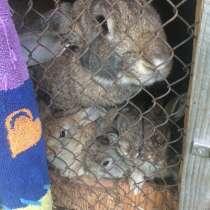 Крольчата Великаны, в Березовский