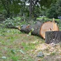 Спилить дерево любой сложности г. Ярославль, в Ярославле