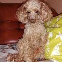 Пропала собака, в Тольятти