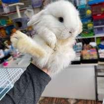 Кролики карликовые декоративные, в Грозном