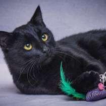 Грустная красавица Мила. Кошка в добрые руки, в Москве