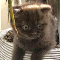 Продается котенок, в г.Ришон-ле-Цион