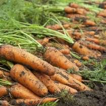 Закупаем морковь оптом, в Краснодаре