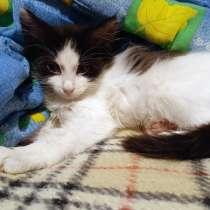 Котенок Бимка, спасенный из ямы - ждет самых любящих хозяев!, в Москве