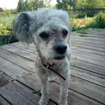 Прибилась собака, в Усть-Илимске