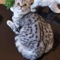 Кошечка пятно на серебре, в Москве