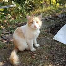 Добрый кот ищет дом, в Таганроге