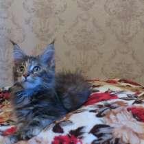 Продается мейн кун девочка, в г.Бишкек