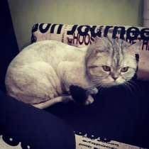Стрижка кошек, в Томске